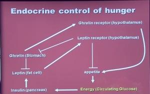 Leptina și grelina, hormonii responsabili cu starea de foame și de sațietate